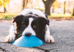 A koronavírus és a csodálatos kutyaorr