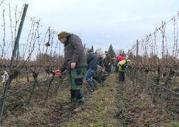 Különleges szőlőmetsző technikával ismerkedtek a borászok