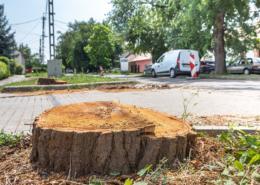 """Az eltűnő fák és cserjék helyett kétszer annyi """"születik"""" majd"""
